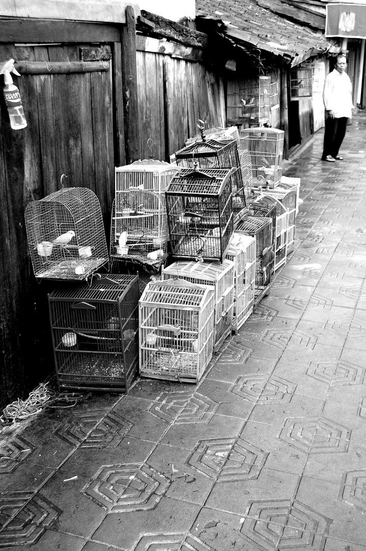 Auf dem Vogelmarkt
