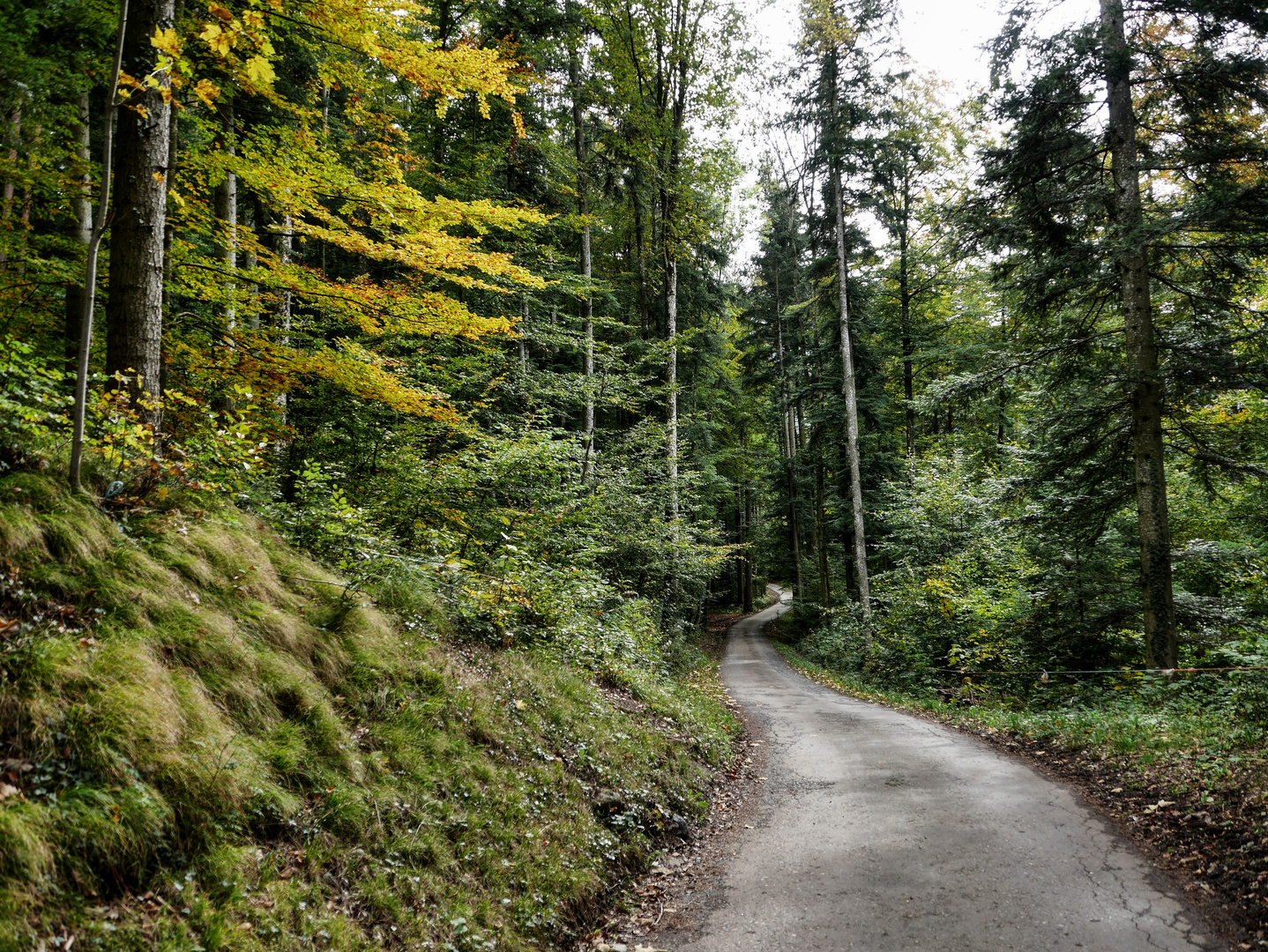auf dem Waldweg