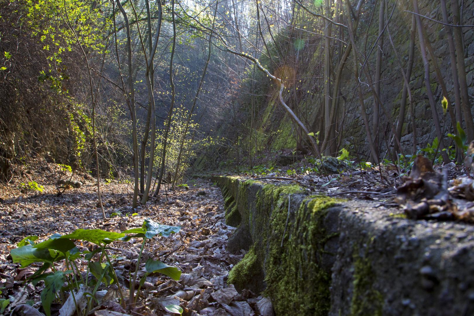 auf dem Weg zu einem lost places in Hameln