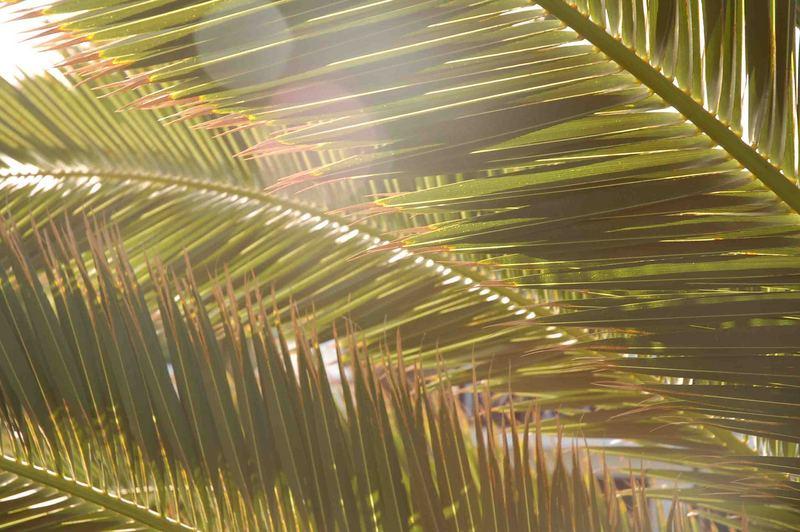 Auf dem Weg zu Meer und Palmen - und zu mir selbst ...