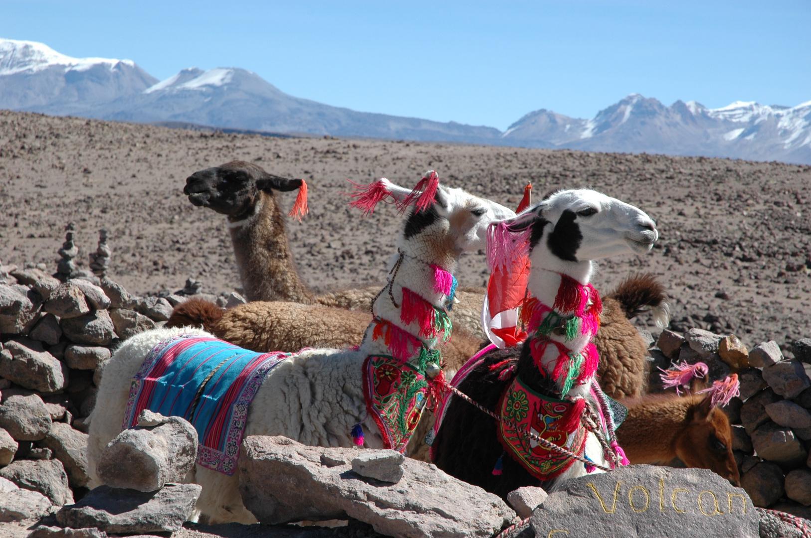 auf dem Weg zum Cañon del Colca - Peru