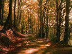Auf dem Wege im Herbst in Solingen