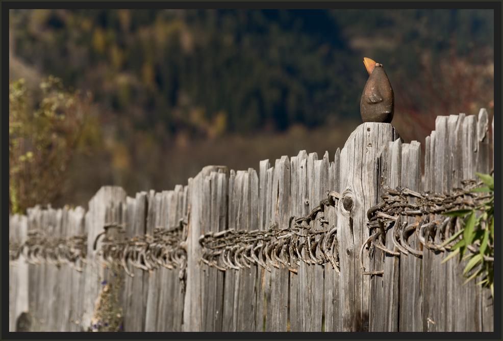 ~Auf dem Zaun~