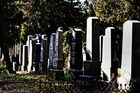 auf dem Zentralfriedhof II