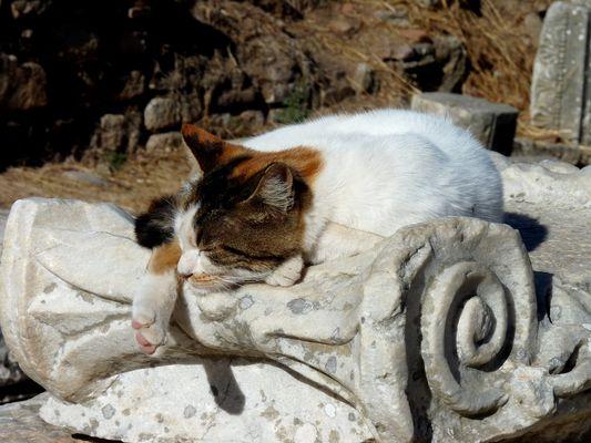 Auf den Mauern von Ephesus
