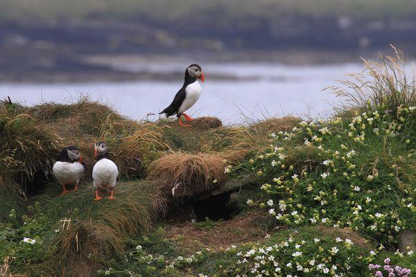 Auf den Orkney Inseln