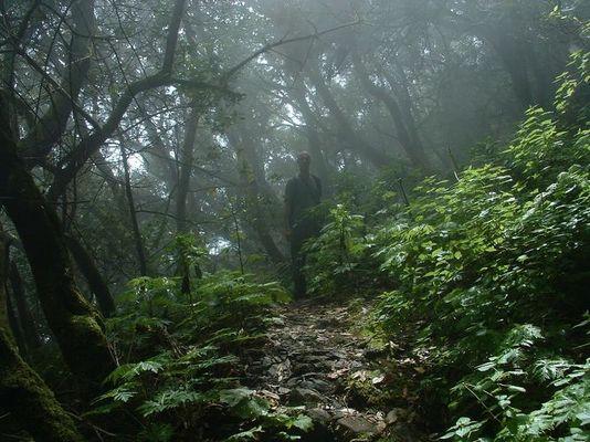 Auf den Spuren von Tarzan....im Nebelwald