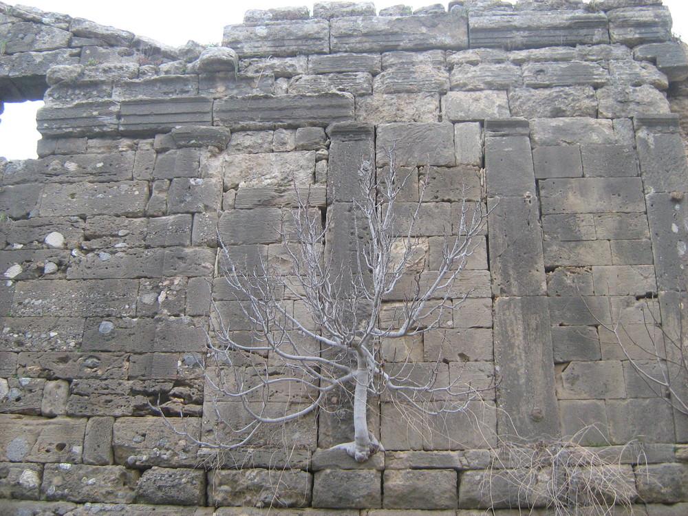 Auf der Antiken Mauer