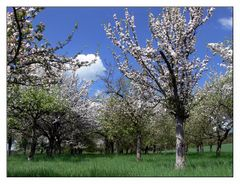 Auf der Apfelplantage