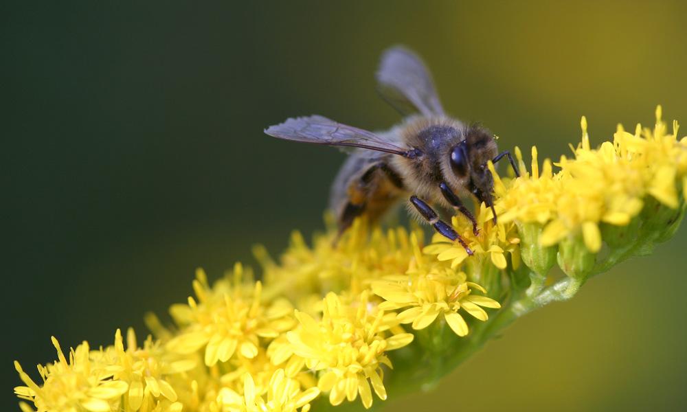 Auf der Bienenweide
