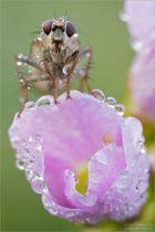 Auf der Blüte