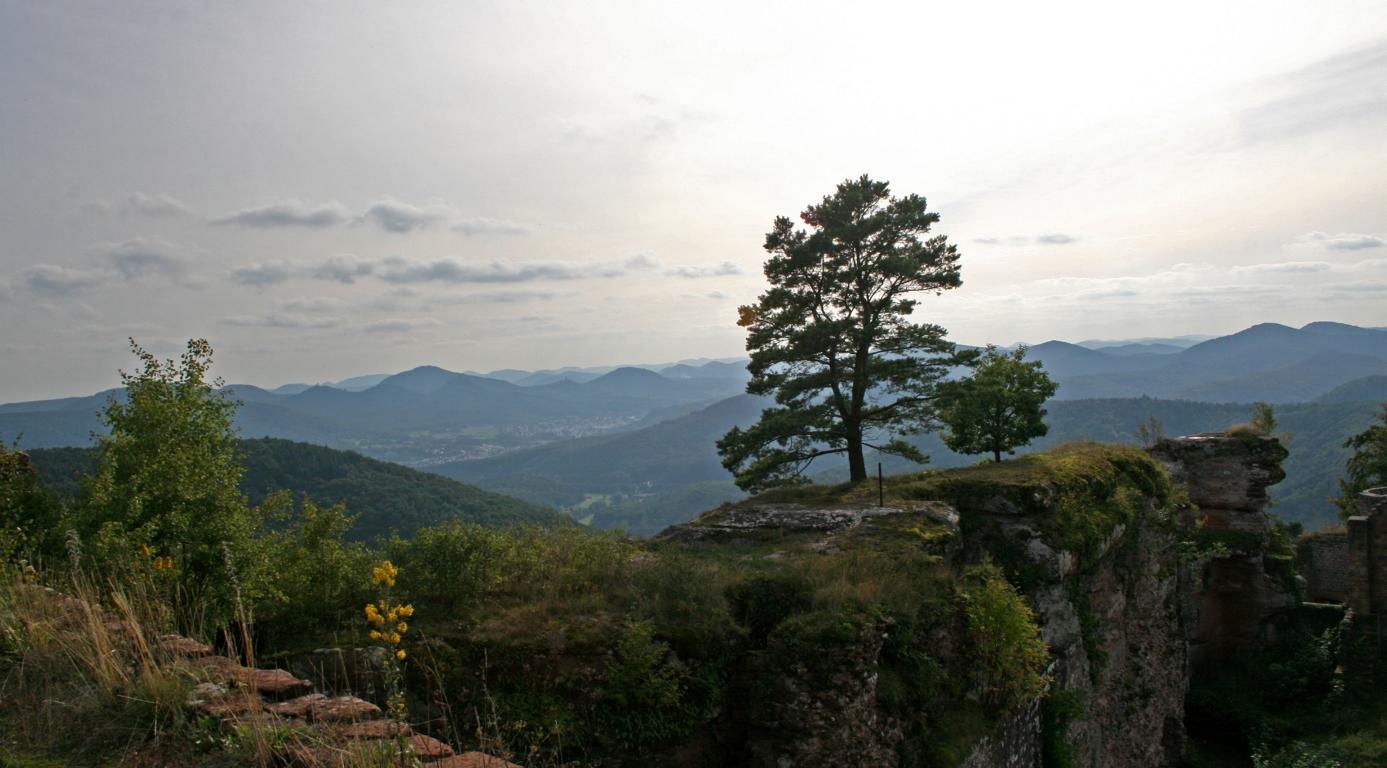 auf der Burg(ruine) Nahe Dernbach im Pfälzer Wald