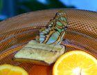 Auf der Insel Mainau im Schmetterlingshaus