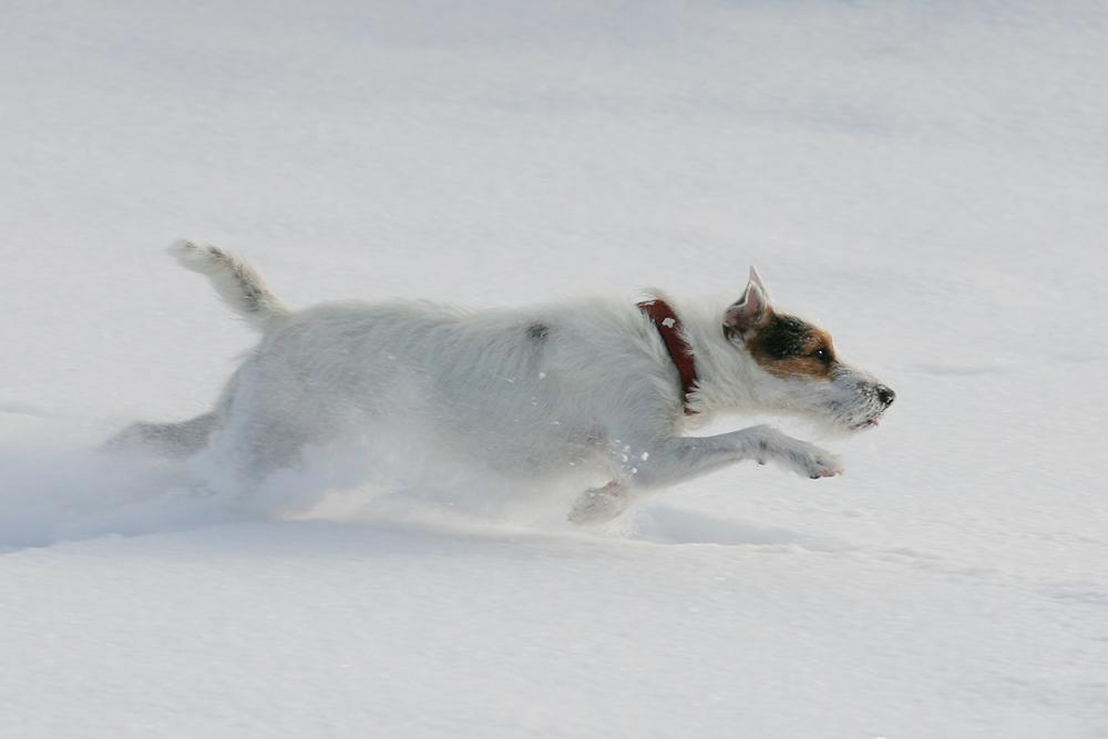 Auf der Jagd nach dem weißen Schneeball