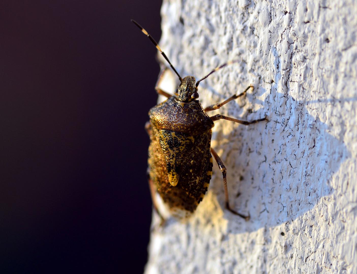 auf der Mauer, auf der Lauer...