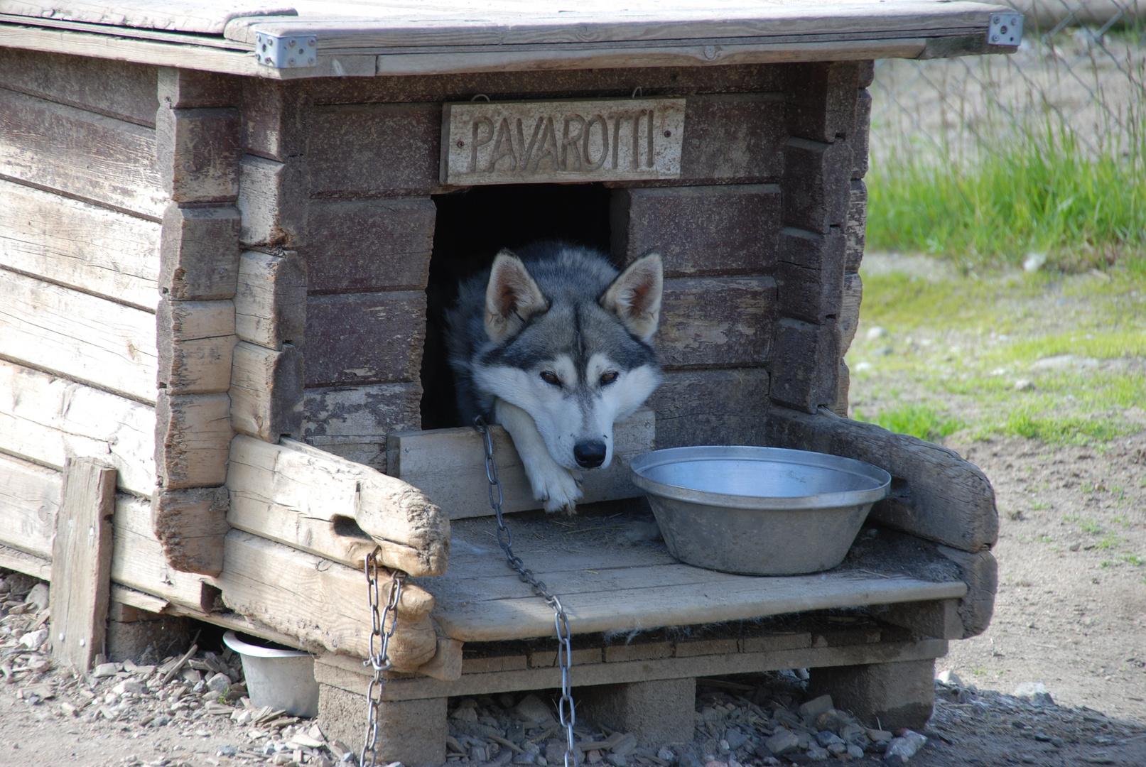 Auf der Schlittenhunde-Ranch