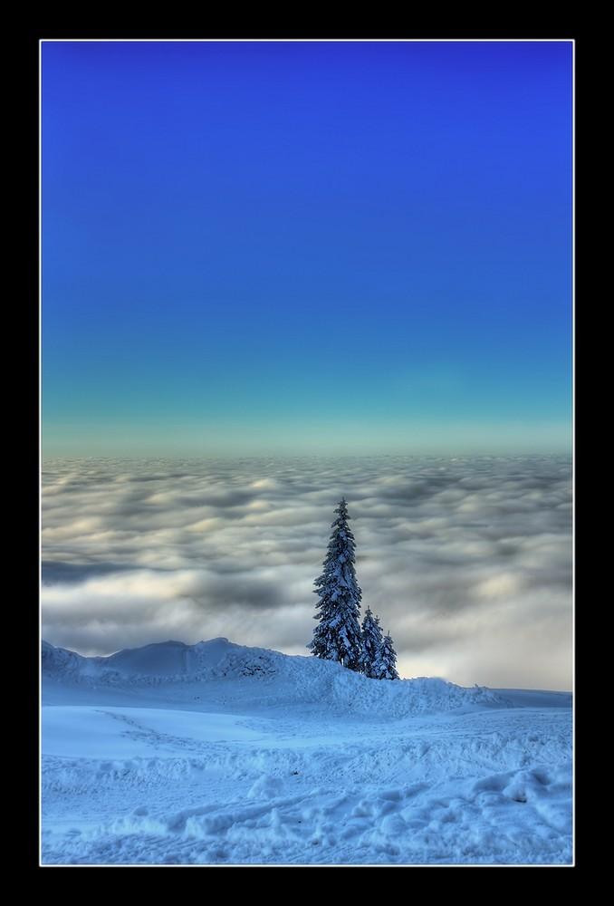 """Auf der Sonnen Alm """"Baum am Wolkenmeer"""""""