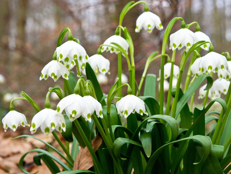 auf der spur der m rzenbecher foto bild pflanzen pilze flechten bl ten kleinpflanzen. Black Bedroom Furniture Sets. Home Design Ideas