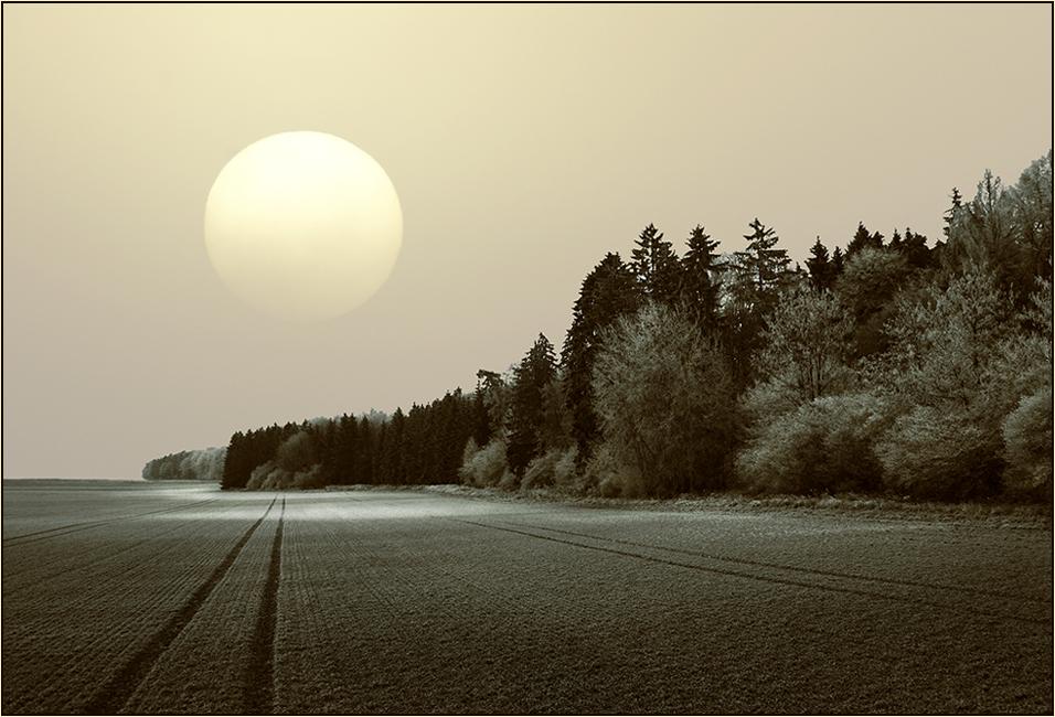 Auf der Spur des frühen Morgens