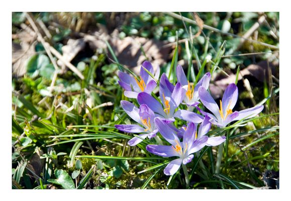 Auf der Suche nach dem Frühling....