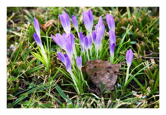 Auf der Suche nach dem Frühling...