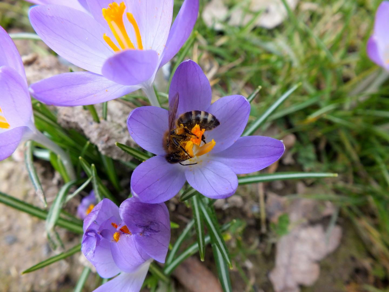 Auf der Suche nach dem Frühling ...