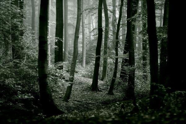 ...auf der Suche nach dem Wanderer...