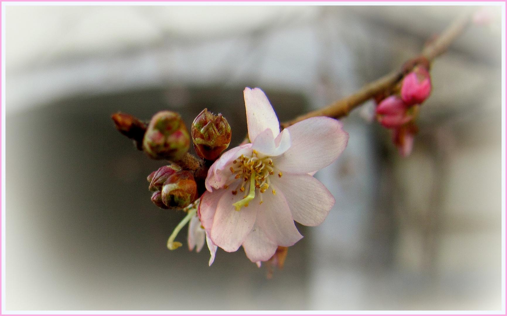 auf der Suche nach Frühling