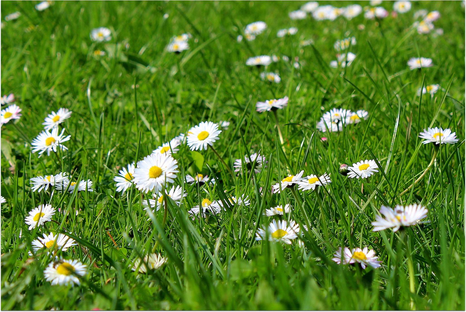 Auf der Wiese haben wir gelegen, und wir haben Gras gekaut,...
