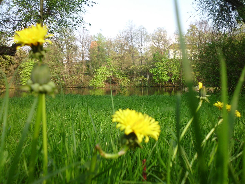 Auf der Wiese haben wir gelegen und wir haben Gras gekaut.