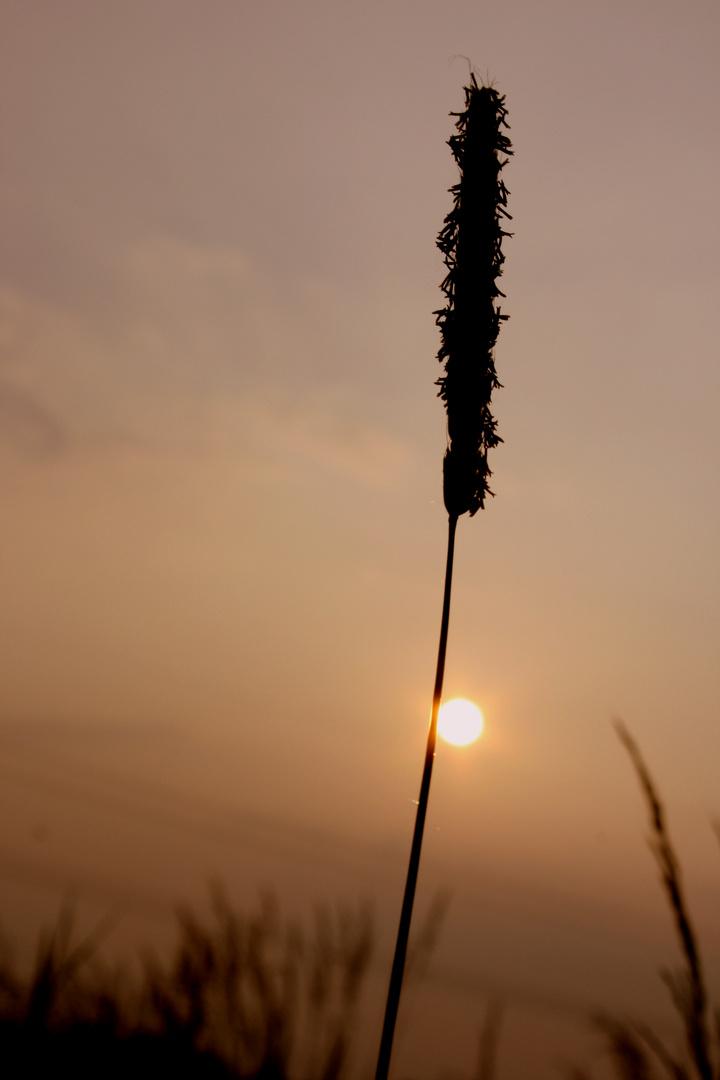 auf der Wiese liegen, bilder schießen und die Sonne genießen