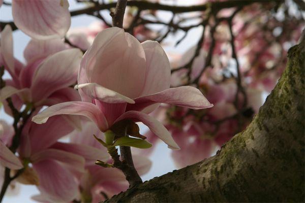 Auf diese Blüten müssen wir noch lange warten...