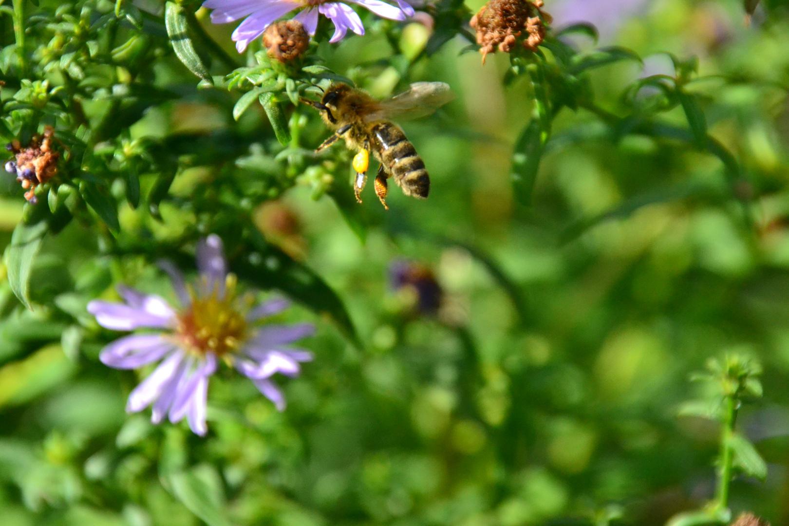 Auf ein volles Pollenhöschen
