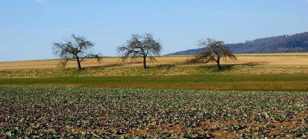 Auf einen Feld mit 3 Bäumen