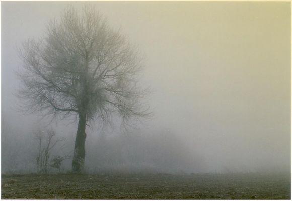 auf einer herbstlichen Morgenwanderung stand einsam...