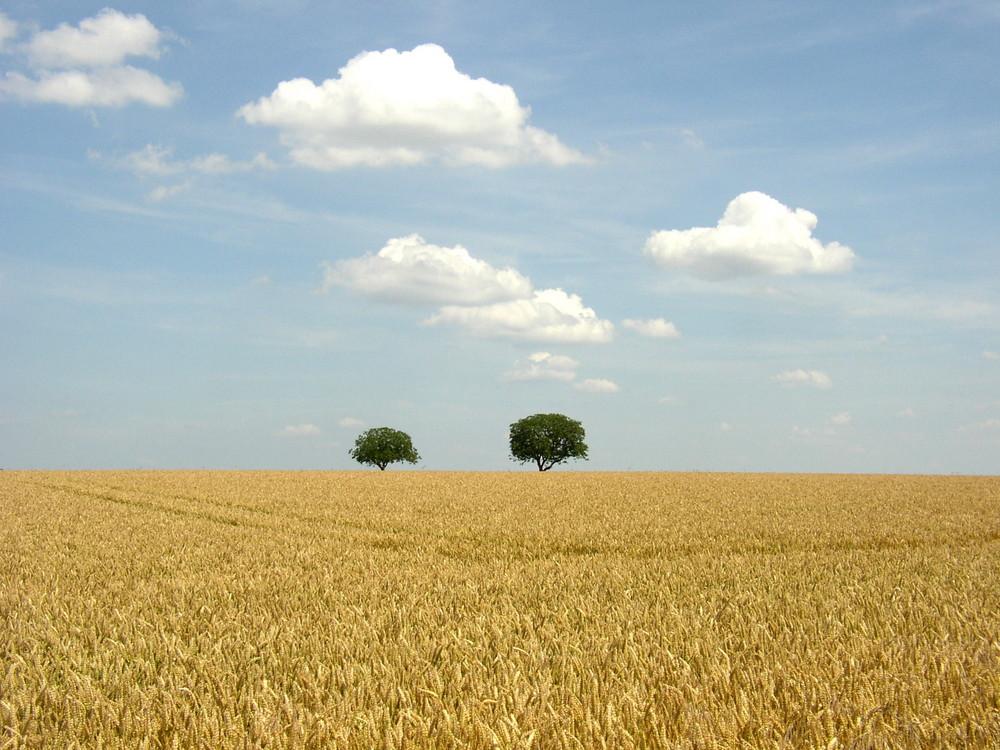 auf einer Wanderung in der Nähe von Chinon /Loire
