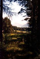 Auf einer Wanderung in Südtirol, auf dem Ritten, August 2001