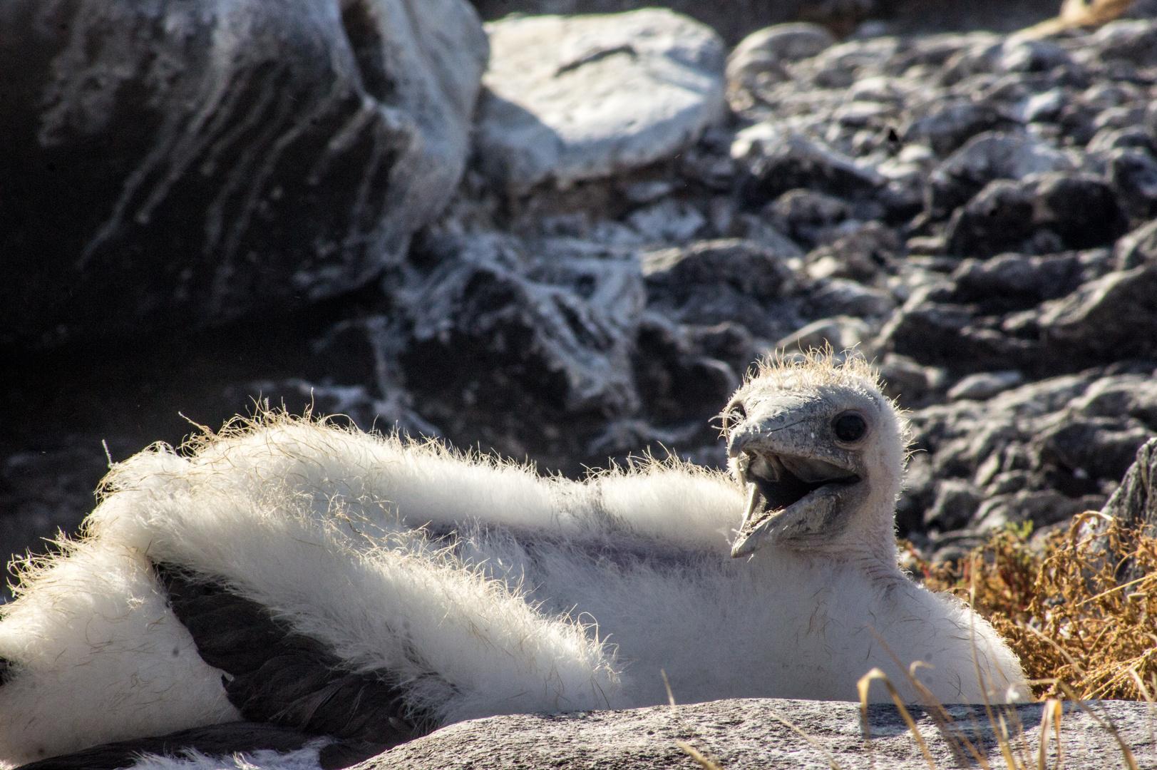 Auf Galapagos 3