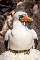 Auf Galapagos