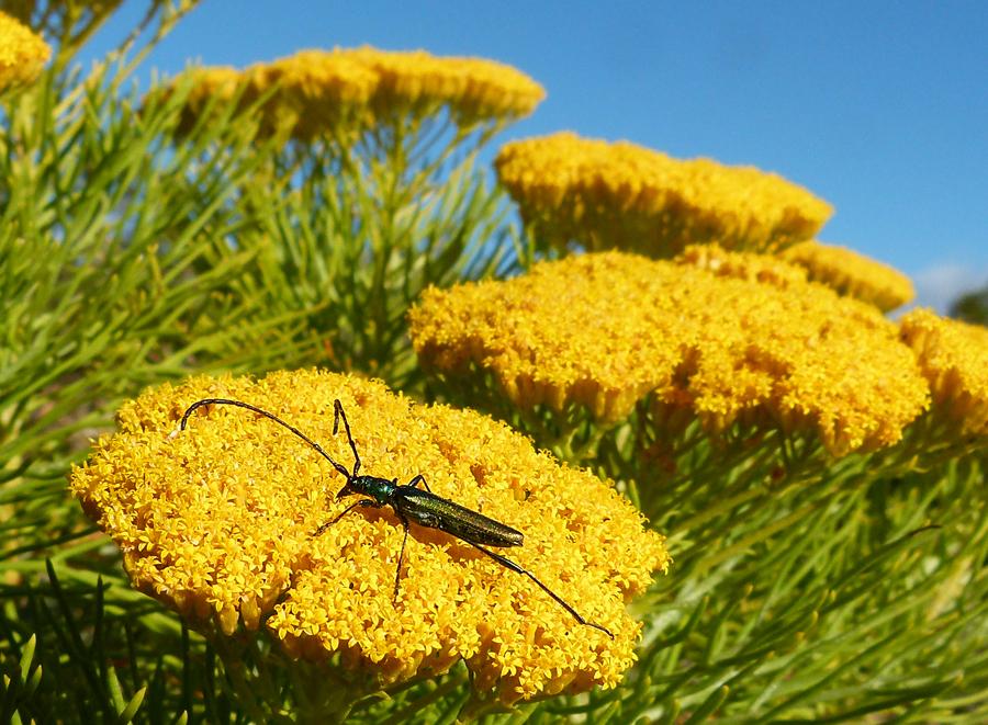 ...auf gelber Blüte.