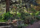 Auf Grund einiger Anfragen stelle ich Drei Aufnahmen von meinem Garten ein