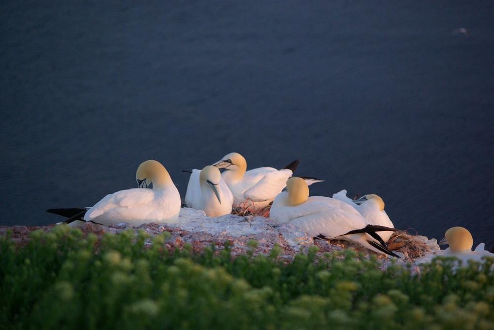 ... auf Helgoland