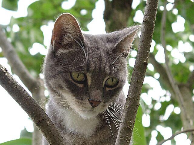 Auf Ihrem Baum! Teil 2