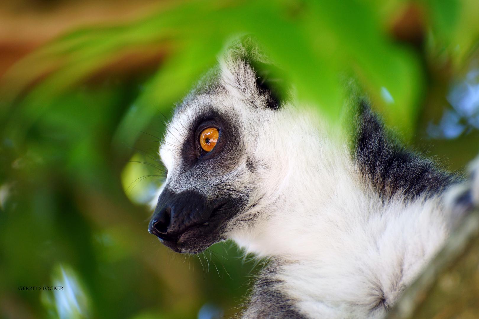 Auf Madagaskar...