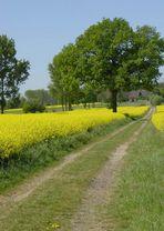 Auf Pättkesfahrt im Münsterland