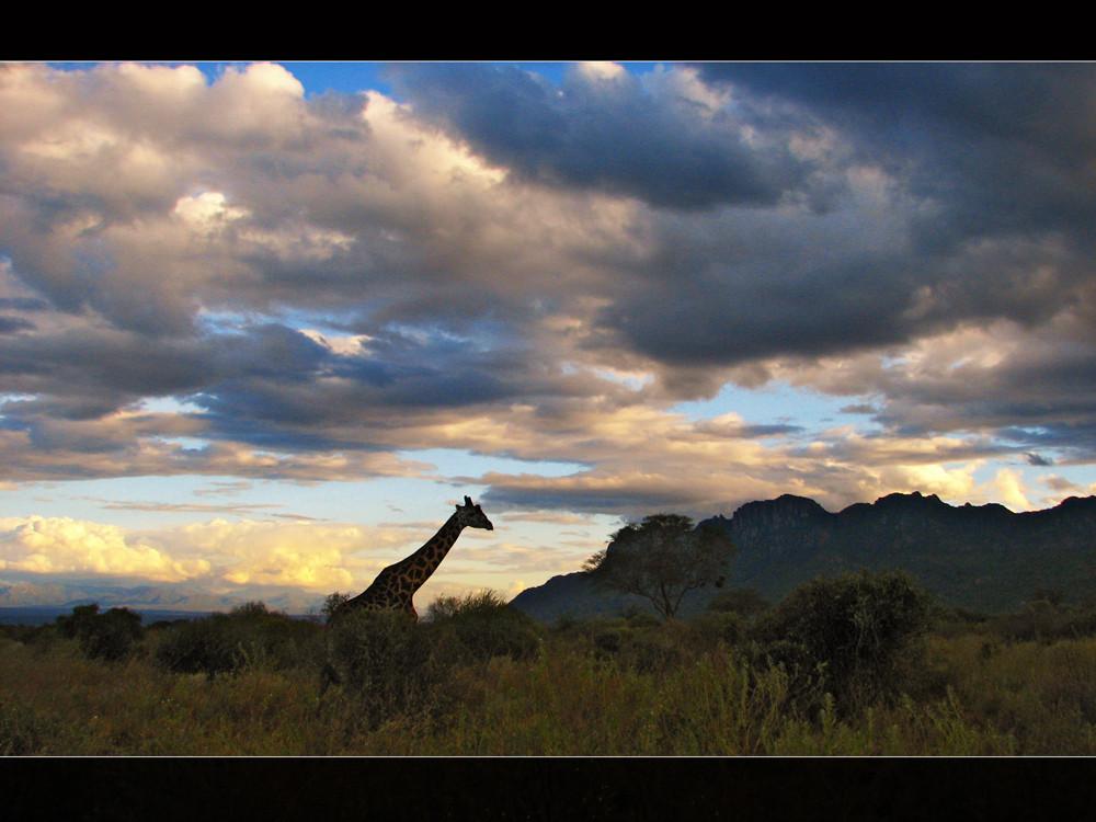Auf Safari...