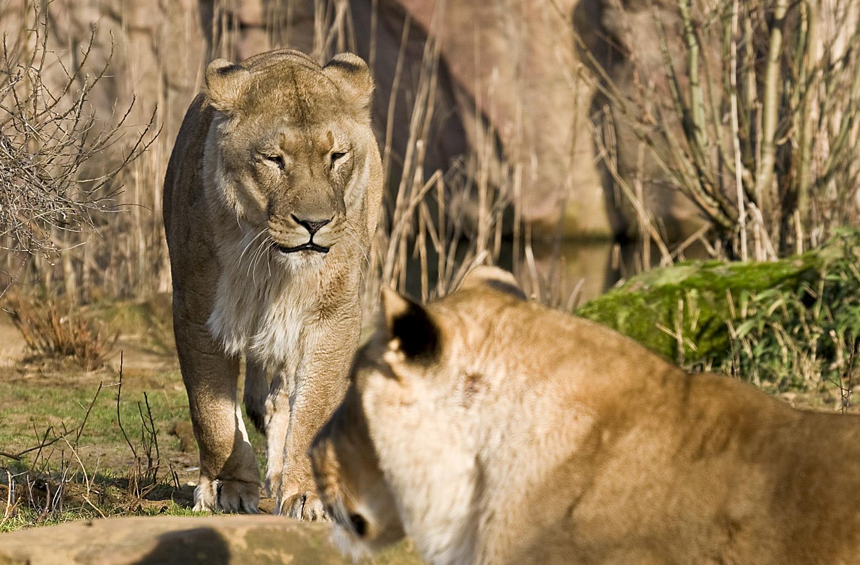 Auf Safari ....