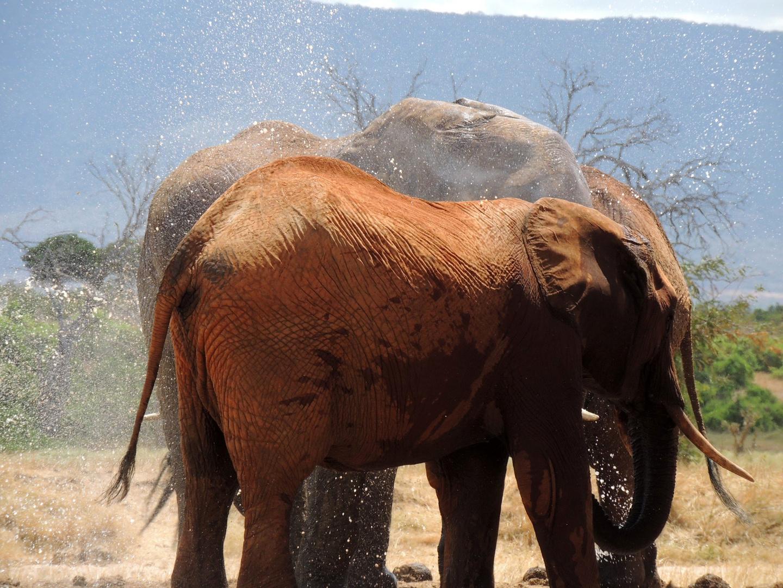 Auf Safari im Tsavo-Ost Nationalpark