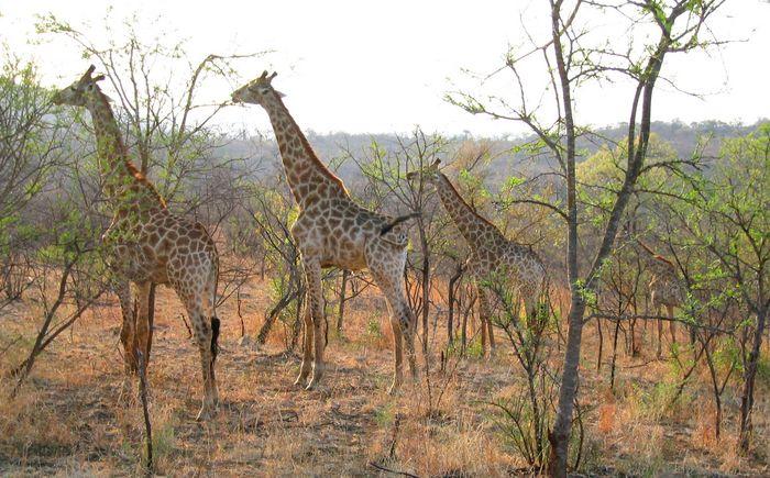 Auf Safari in Afrika...