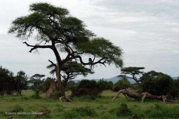auf Safari - ohne Tiere